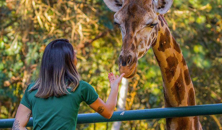 O maior zoológico particular do Brasil